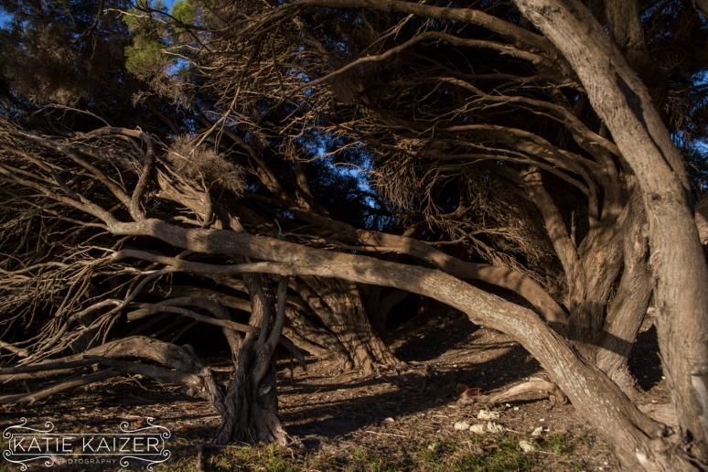 RottnestIsland_029_KatieKaizerPhotography